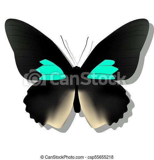 Black Butterfly On White Background With Shadow Gradient 3d