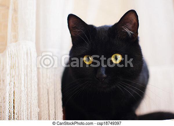 black cat at home - csp18749397