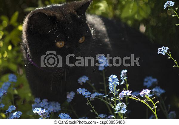 black cat between flowers - csp83055488