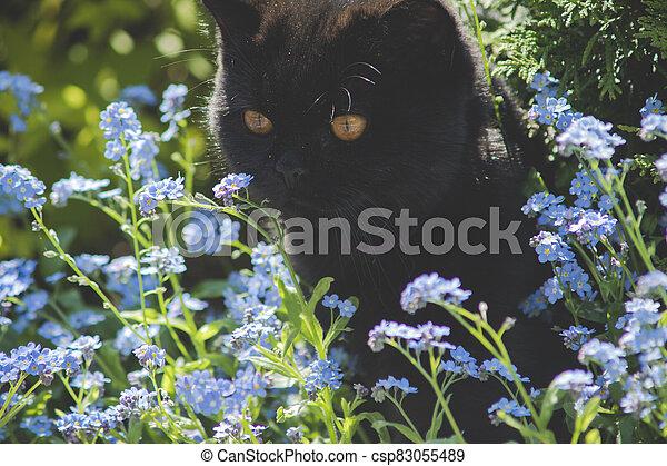 black cat between flowers - csp83055489