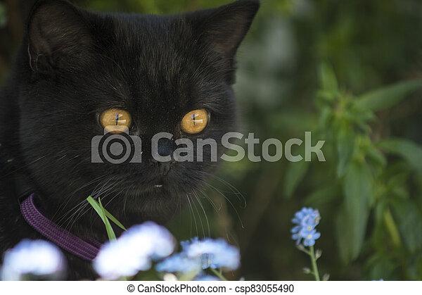 black cat between flowers - csp83055490