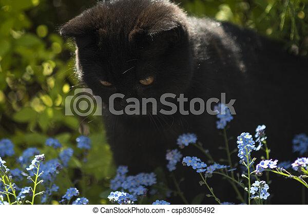 black cat between flowers - csp83055492
