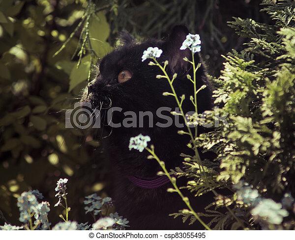 black cat between flowers - csp83055495