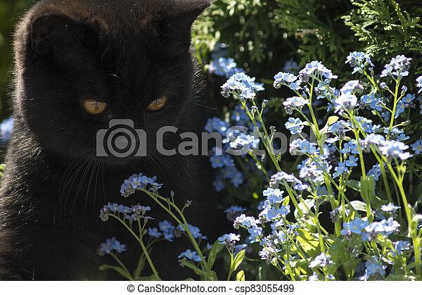 black cat between flowers - csp83055499