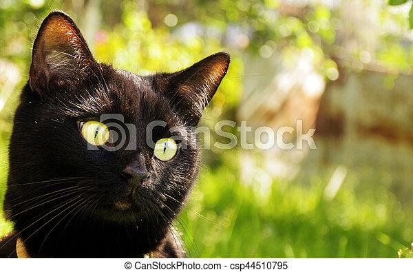 Black cat in the garden - csp44510795