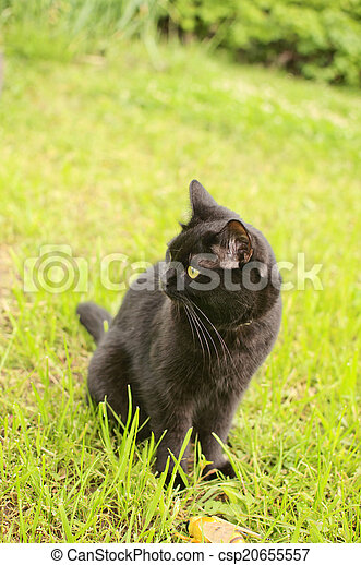 black cat in the green grass - csp20655557