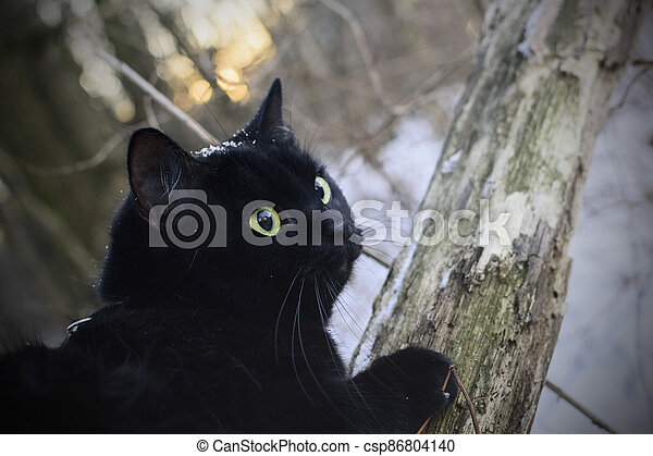 Black cat in winter forest - csp86804140