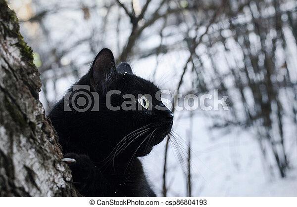 Black cat in winter forest - csp86804193