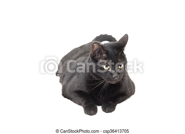 black cat laid down over white - csp36413705