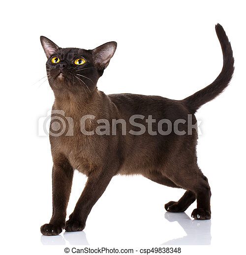 Black Cat On A White Background Black Cat With Yellow Eyes On A White Background
