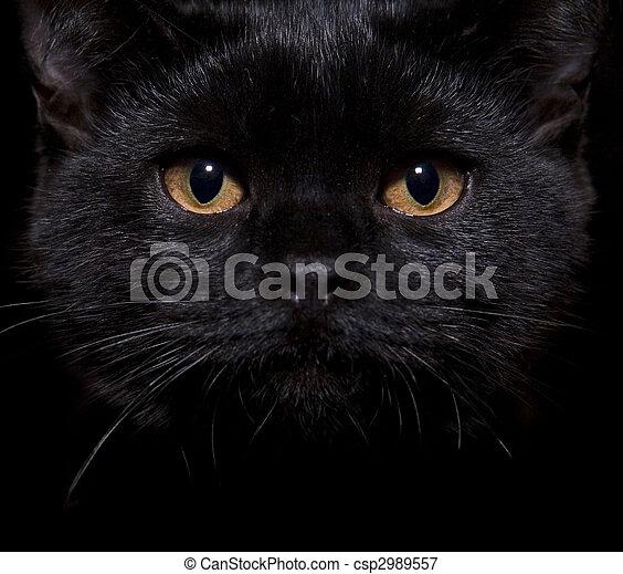 black cat on black - csp2989557