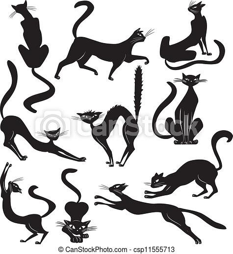 black cat - csp11555713