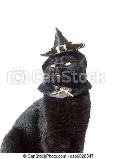 46e94808 Black cat with witch hat. Cute black cat with witch hat on white ...
