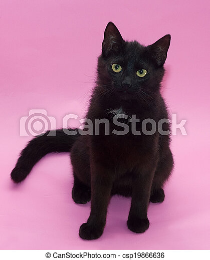 Black Cat With Yellow Eyes Sitting On Pink Background