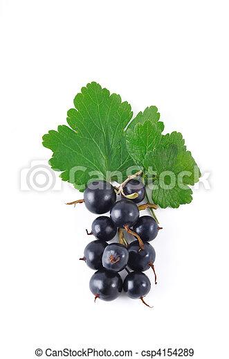 black currant2 - csp4154289