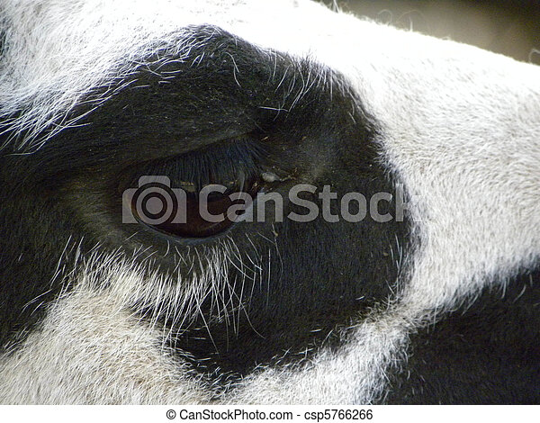 black eye - csp5766266