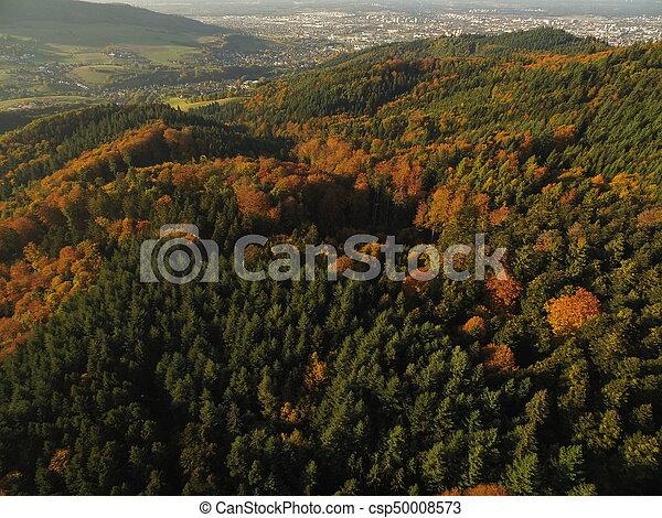 black forest at autumn - csp50008573
