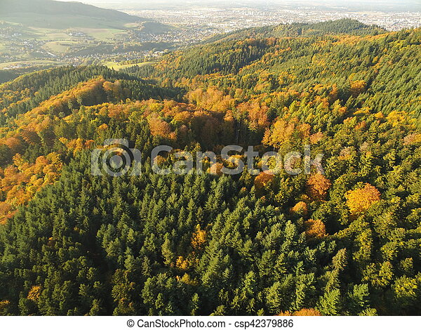 black forest at autumn - csp42379886