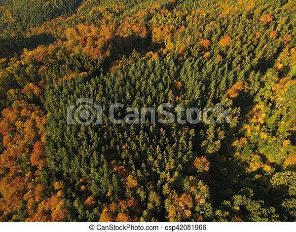 black forest at autumn - csp42081966