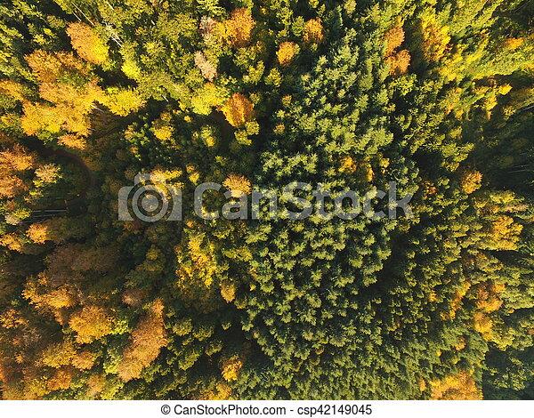 black forest at autumn - csp42149045