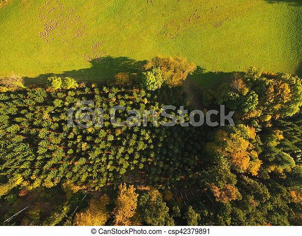 black forest at autumn - csp42379891