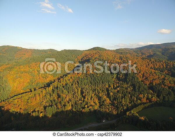 black forest at autumn - csp42379902