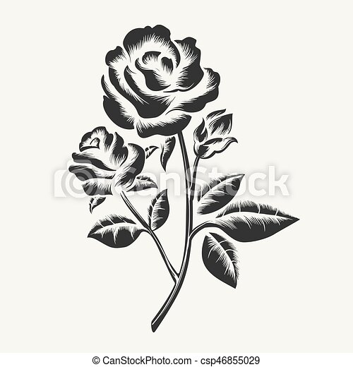 Rose etching vector black hand drawn roses engraving vector