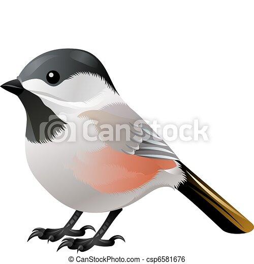 black headed white bird - csp6581676