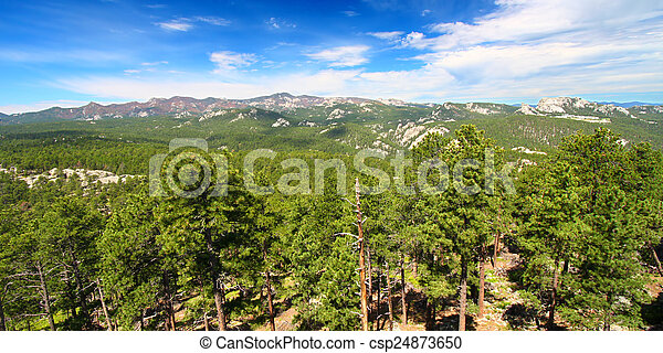 Black Hills National Forest Panoramic - csp24873650