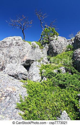 Black Hills National Forest - csp7773021
