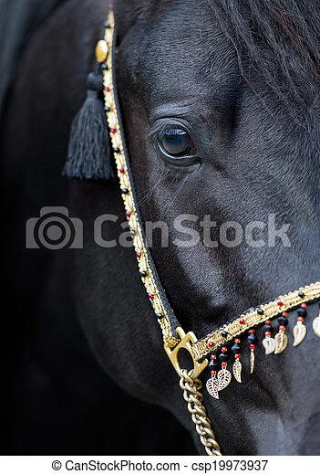 Black horse eye - csp19973937