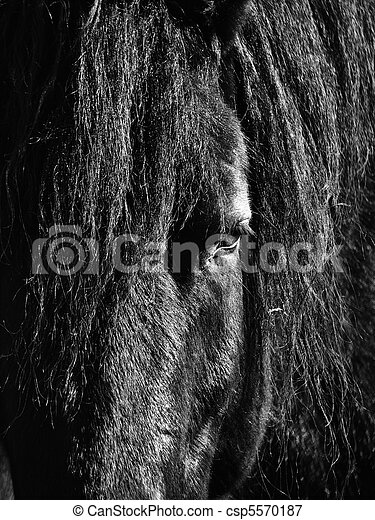 Black Horse Head - csp5570187