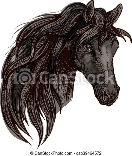 Black horse head watercolor portrait - csp39464572