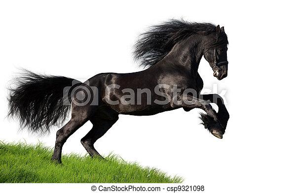 Black horse isolated on white - csp9321098