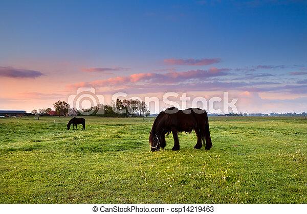 black horses on pasture at sunrise - csp14219463