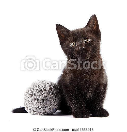 Black kitten with a woolen ball - csp11558915