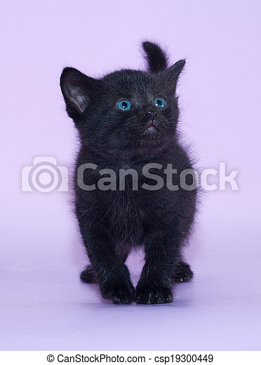 Black Kitten With Blue Eyes On Lilac Background Canstock