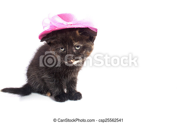feeb3c6c Black kitten with hat. Black kitten with pink hat isolated on white.
