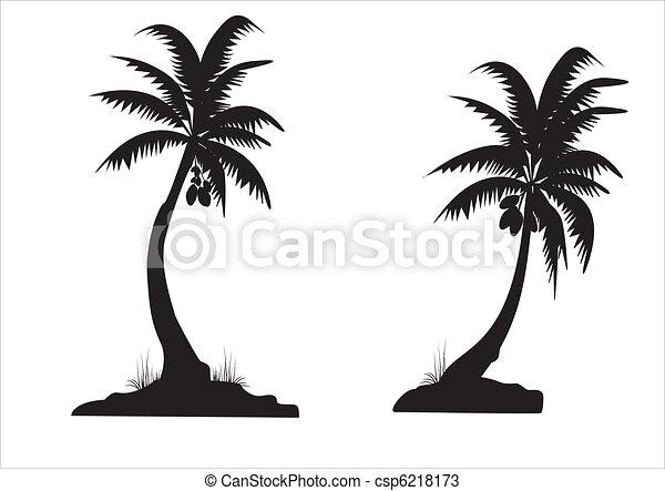 black palms - csp6218173