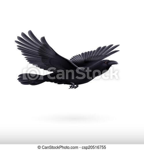 Black raven - csp20516755