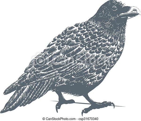 Black Raven Engraving Illustration - csp31670340