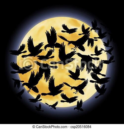 Black raven - csp20516084
