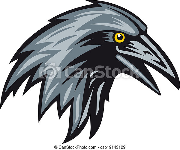 Black raven - csp19143129