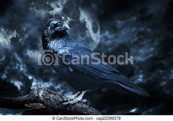 Black raven in moonlight perched on tree. Scary, creepy, gothic setting. - csp22399379