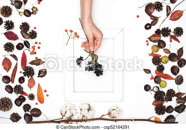 black rowan berries in hand - csp52164291