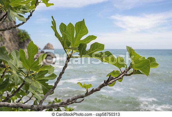 Black sea, Crimea - csp58750313