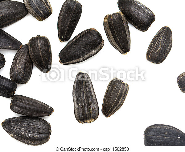 black seeds on a white background. macro - csp11502850