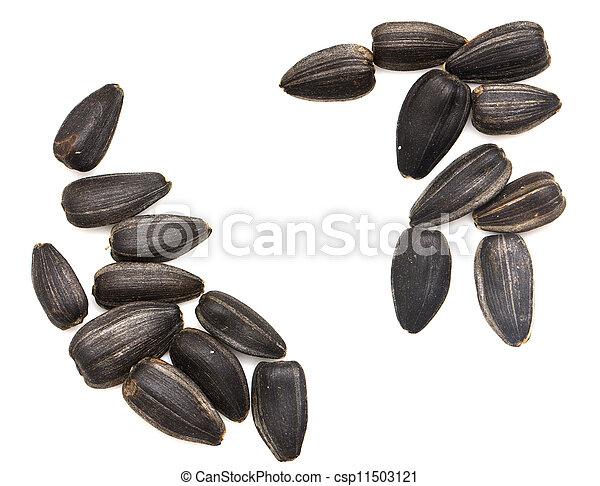 black seeds on a white background. macro - csp11503121