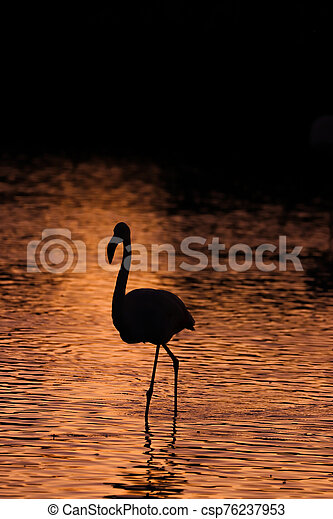 Black silhouette of flamingos in the water at sunset - csp76237953