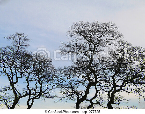black tree in the winter time - csp1277725